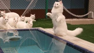 How iş the Cat pool(Turkey Van Cat)