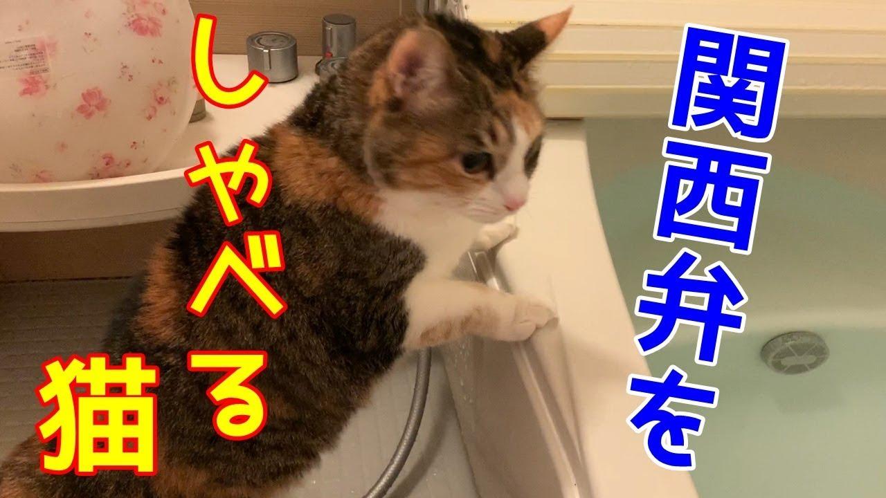 関西 しゃべる 弁 猫