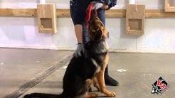 K9 University's Canine Boarding School Program