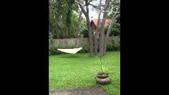 244 Sandpiper Dr Casselberry FL 32707 - FOR RENT