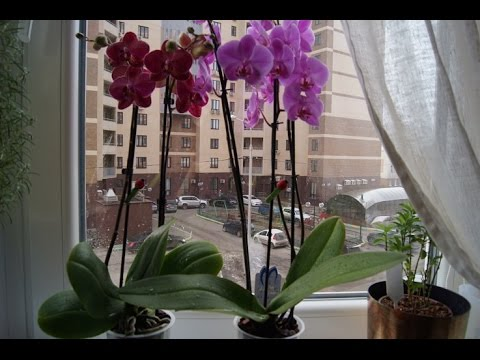 Приметы про орхидею в доме