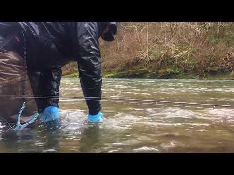 Winter Steelhead Fishing - Leakywadersfishing