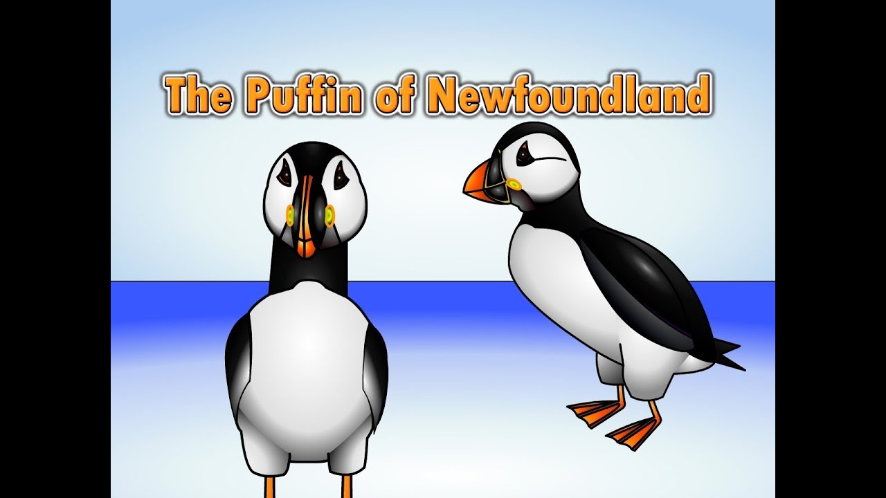 the puffin song puffin of newfoundland youtube