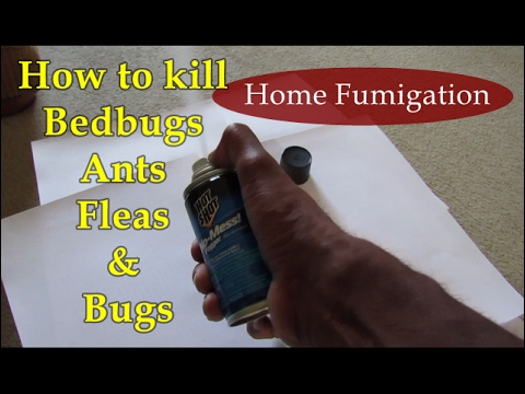 discover how you can instantly kill bed bugs, spiders, ants, fleas
