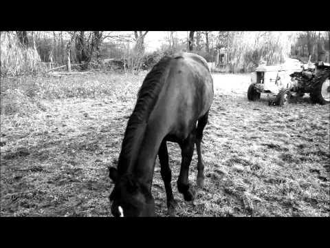 Black stallion scheitan