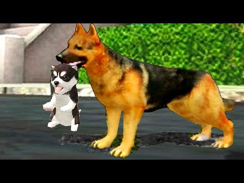 Симулятор СОБАЧКИ #3 ОВЧАРКА ПОБЕДИЛА родился щенок как симулятор котенка  для детей Валеришка