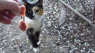 Cute cats - Feeding the homeless