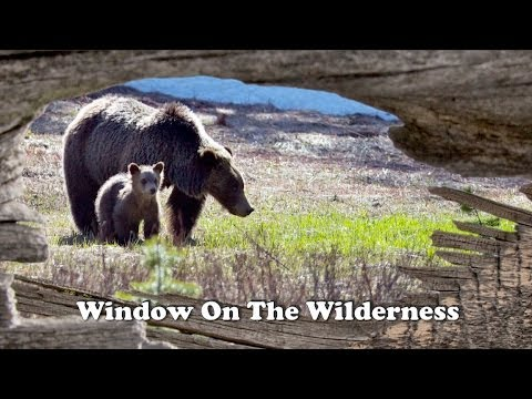 Greater Yellowstone ~ Window on Wilderness