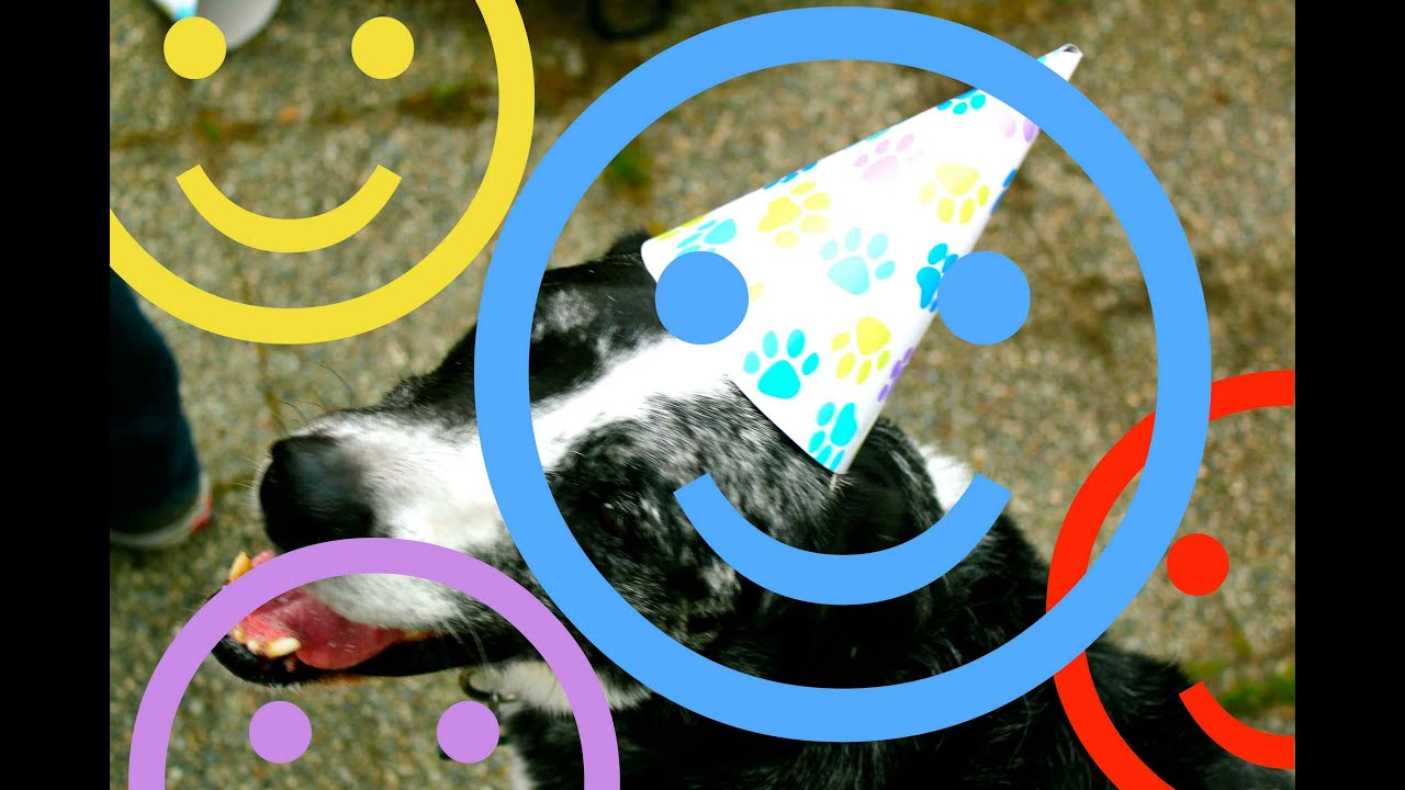 HAPPY BIRTHDAY SONG O Dogs Wearing Happy Birthday Hats