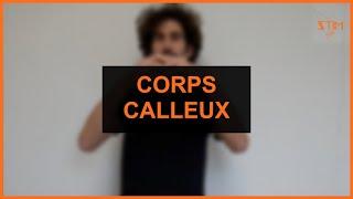 Santé - Corps calleux