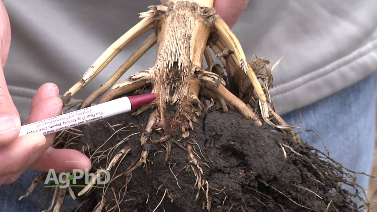 Farm Basics 946 Corn Root Systems Air Date 5 22 16