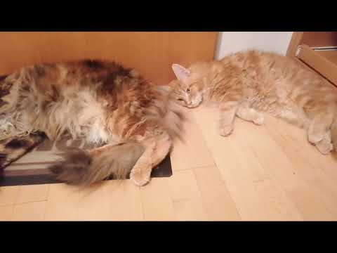 Baby Cats – Cute and Funny Cat Videos Compilation CatOrinoco