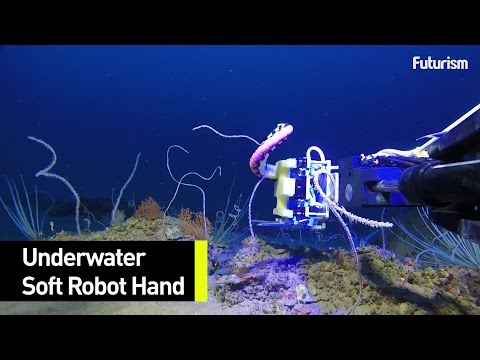 The Robotic Hands That Are Changing Marine Biology