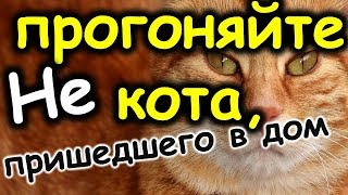 Не прогоняйте кота, пришедшего в дом: приметы о кошках на счастье. Как питомцы помогают хозяевам