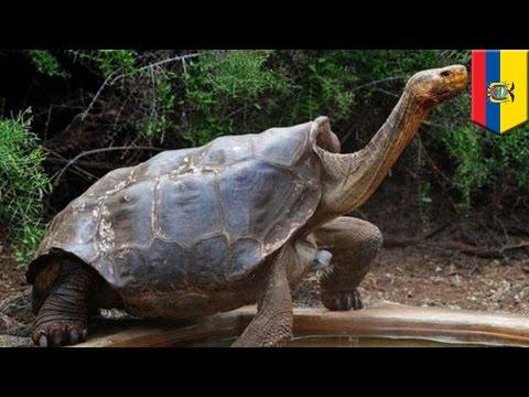 Otis - Horny Turtle Saves Entire Species