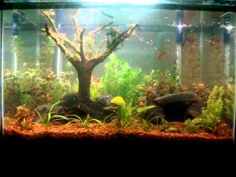 Mini Aqua Garden YouTube
