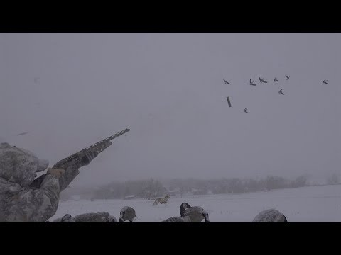 Canada Goose {Catch Clean Cook} With Mr. David Wise