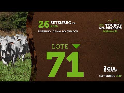 LOTE 71 - LEILÃO VIRTUAL DE TOUROS 2021 NELORE OL - CEIP