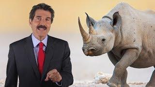 Stossel: save the rhinos!