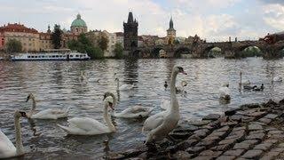 Достопримечательности Праги. Лебеди на берегу Влтавы(Гуляя среди различных достопримечательностей Праги, мы всегда приходим покормить лебедей. В Праге очень..., 2013-06-30T14:33:12.000Z)