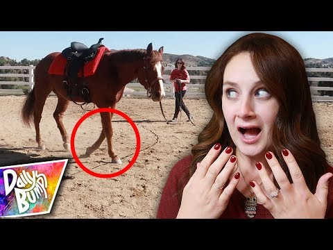 What Happened To My Horse?!