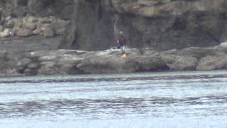 和歌山の釣太郎です。http://www.tsuttarou.co.jp/ 白浜町の笠甫(かさ...