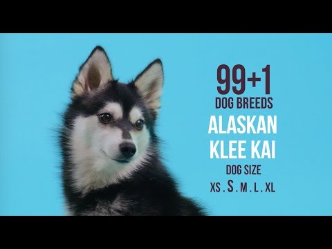 Alaskan Klee Kai / 99+1 Dog Breeds
