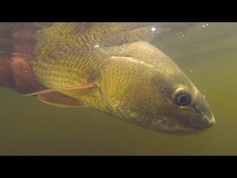 Tampa Bay Kayak Fishing With Live Shrimp [Multi-Species]