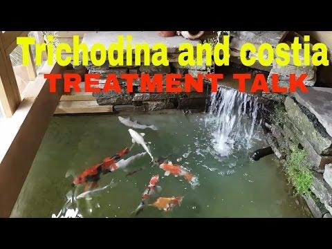 Trichodina And Costia Treatment For Koi.