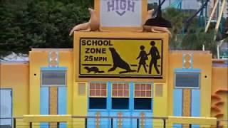 2018 Sea Lion High