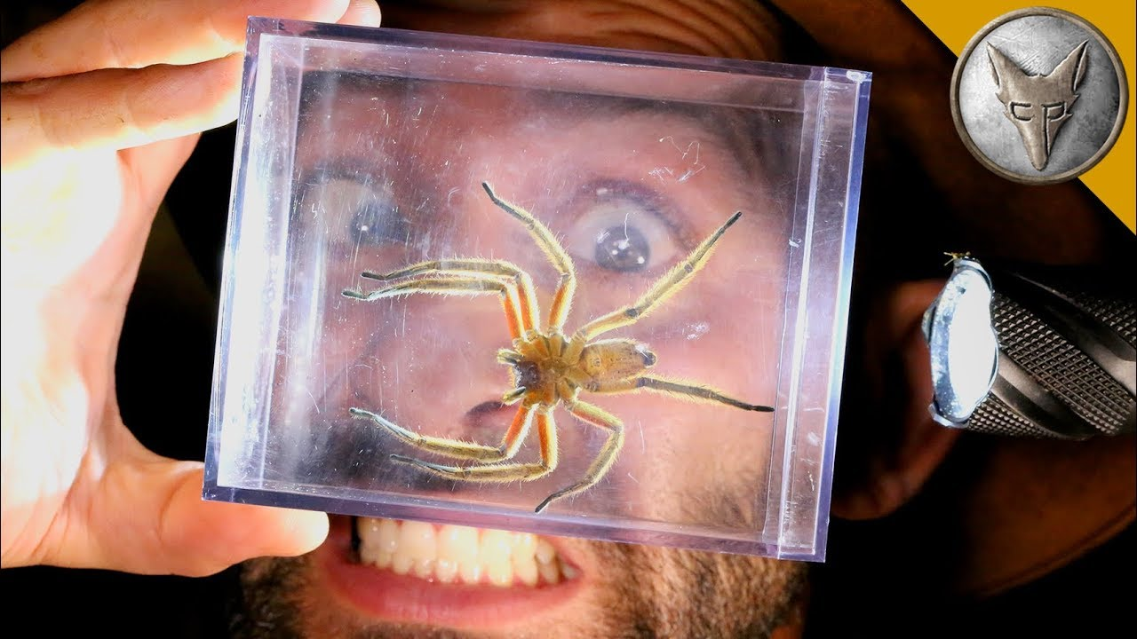 World's MOST DANGEROUS Animal Catches!