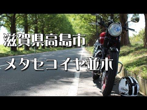滋賀県高島市メタセコイヤ並木