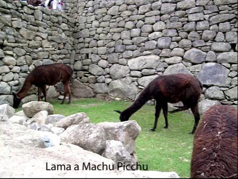 PERU', BOLIVIA e  CILE