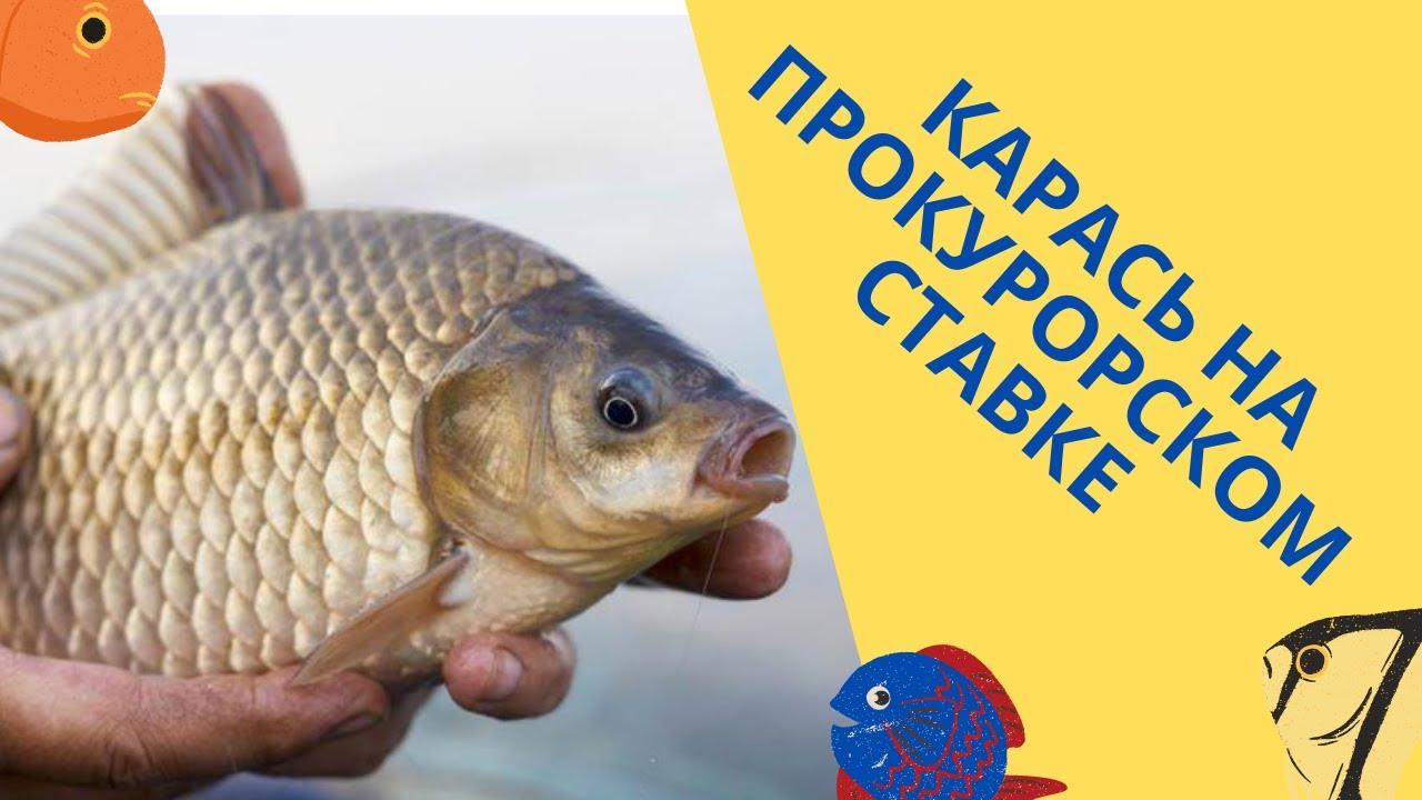 Рыбалка на 12-ом водоёме🔥🔥🔥, ПРОКУРОРСКИЙ ставок. Открытие сезона 2021. Ветер сносит рыбаков !😅