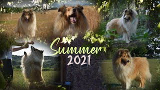 Summer 2021  & Dog tricks by Thunder the rough collie
