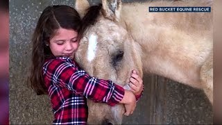 An 8-year-old girl gave up her birthday gifts this year and asked friends to donate to a Los Angeles-area group that rescues abused and neglected horses.
