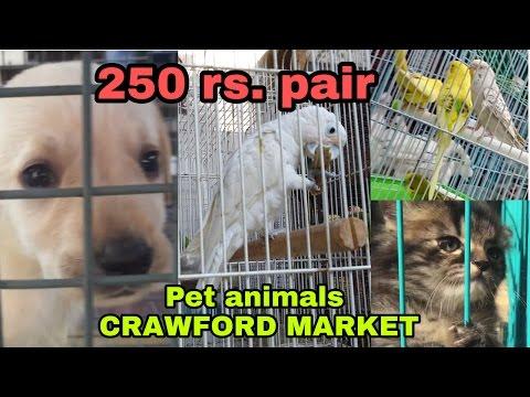 CRAWFORD MARKET | PET ANIMALS |