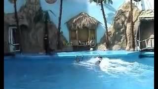 Игры с дельфинами!!!!!!!!!!!!!