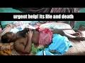 Urgent help- its life and death