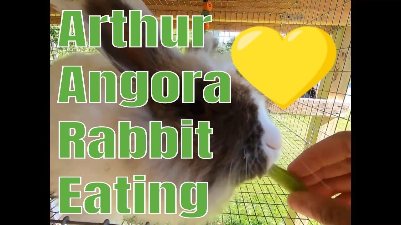 Arthur the angora rabbit eating peas and grass