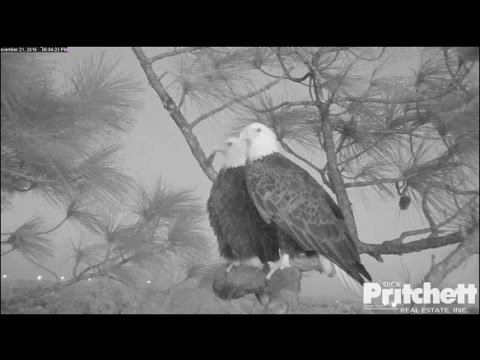SWFL Eagles ~ Tonight's the Night 11.21.16