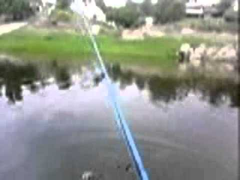 PESCA DE TARARIRA TRAIRA CORDOBA Travel Video