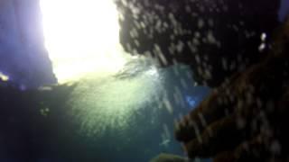 Dive in Palma de Mallorca Aquarium