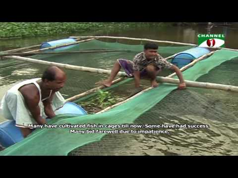 Fish farming in cages