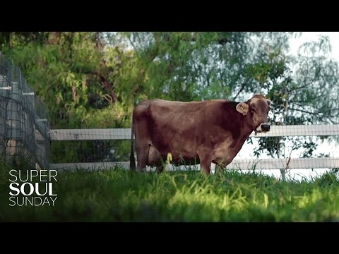 SuperSoul Short: What Maggie the Cow Taught a New Farmer About Letting Go | SuperSoul Sunday | OWN