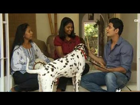 Paras plays around with three Dalmatians in Coimbatore