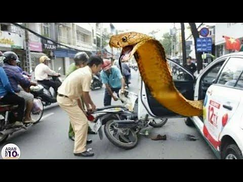 شكت الشرطة في هذه السيارة وعند المداهمة كانت الصدمة..!!