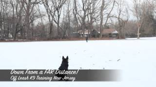 Germand Shepherd Puppy Off Leash K9 Training New Jersey Amazing Before And After