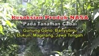 Budidaya Cabai Merah Organik NASA di Magelang, Jawa Tengah