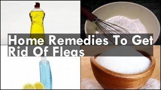 Home Reme Get Rid Fleas